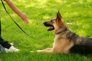 Kutyakiképzés