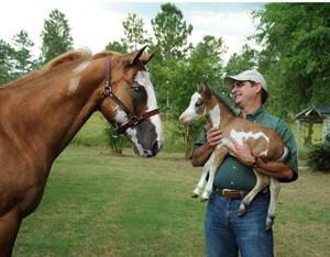 A lovak gondozása