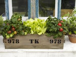 Zöldség erkély