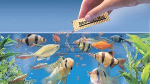 Akváriumi halak etetése
