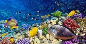 Egyiptom: Vörös-tenger
